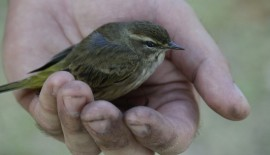 Bird In Hand Photo2